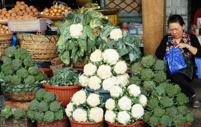 Nhiều nhà vườn canh tác rau tại Đà Lạt nhận định, nếu mưa lớn kéo dài sẽ khan hiếm hàng.