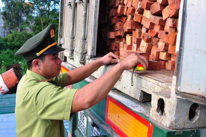 Lực lượng kiểm lâm kiểm tra container chở hơn 40 tấn gỗ hương. Ảnh: Tử Trực