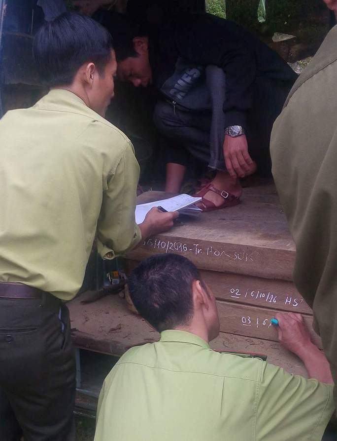 Số gỗ lậu trên do nhóm đối tượng vào khu vực rừng VQG Phong Nha – Kẻ Bàng để khai thác trái phép đã được tạm giữ
