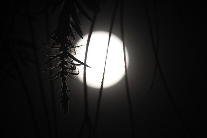 Siêu mặt trăng đạt cực đại vào khoảng thời gian 20 giờ đến 22 giờ đêm 14-11, rực sáng lung linh.
