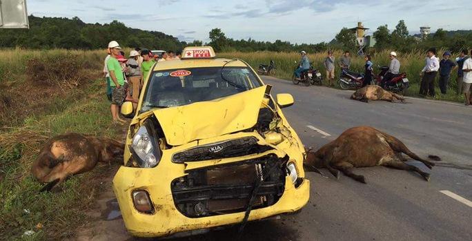 3 con bò nằm chết la liệt sau khi bị taxi tông trúng. Ảnh trên Facebook