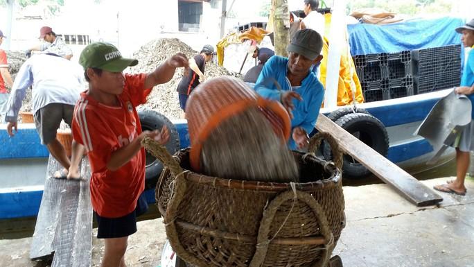 Thu hoạch cá chuyển vào nhà thùng làm nước mắm ở Phú Quốc Ảnh: Văn Quyên
