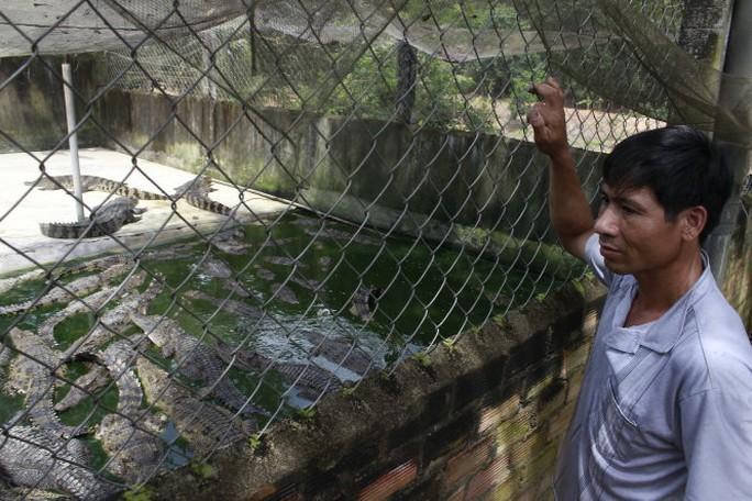 Hơn 50 con cá sấu 3 năm tuổi được ông Hướng (Đồng Nai) kêu bán ba tháng nay nhưng chẳng thương lái nào chịu mua, dù giá chỉ còn 50.000 - 60.000 đồng/kg - Ảnh: NGUYỄN TRÍ