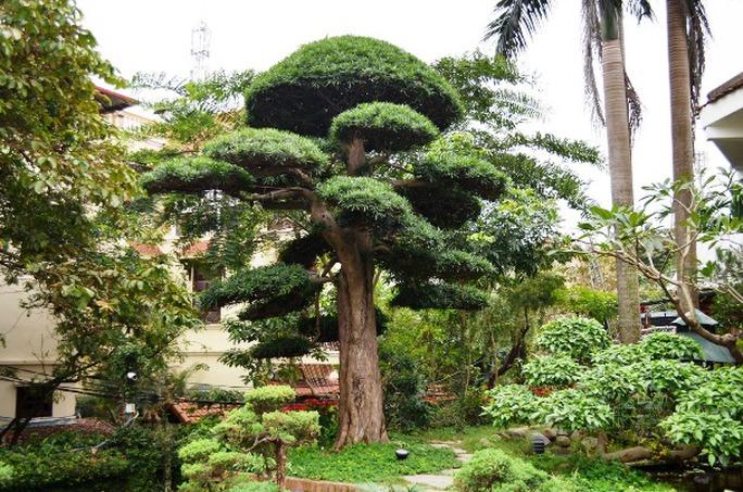 Trong ngôi vườn có hàng ngàn cây cảnh quý được nhà báo Sử Trường Sơn sưu tầm ở khắp cả nước mang về đây
