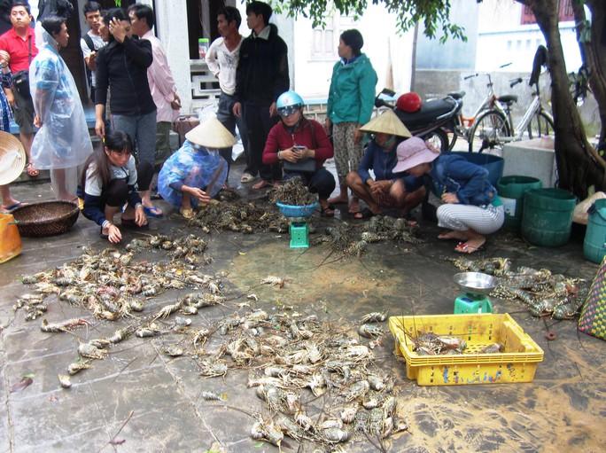 Hàng đống tôm hùm bị thương lái vứt ra vì đã chết nên không mua