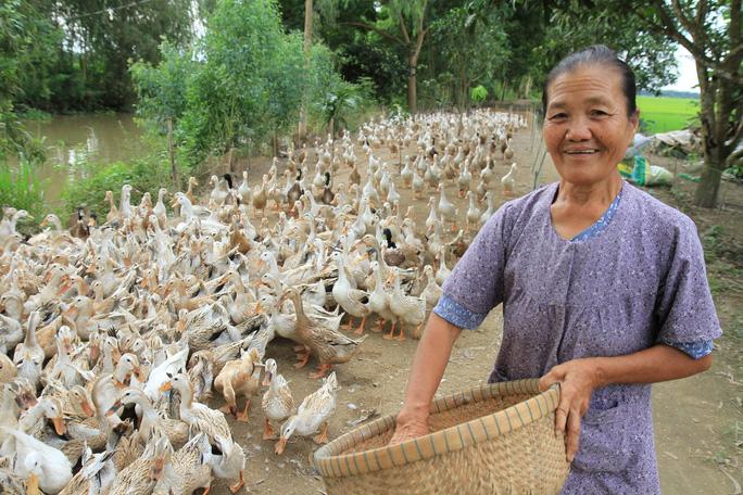 Bà Thiền với bầy vịt nuôi để làm từ thiện