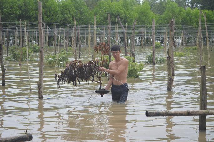 Toàn bộ diện tích cây trồng của gia đình anh Cấn Vương Thành ngập sâu trong nước