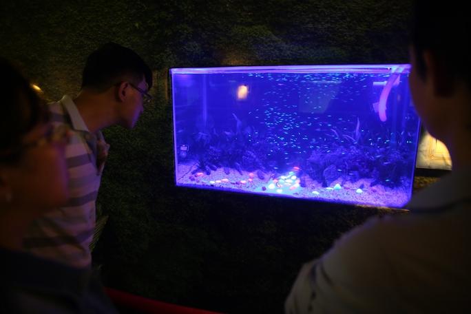 Cá phát sáng thu hút nhiều người hiếu kỳ