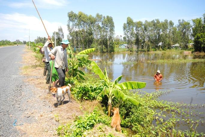 Về miền Tây xem chó săn chuột đồng mùa nước nổi