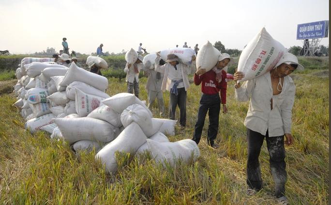 Dù là nước xuất khẩu gạo hàng đầu nhưng nông dân có thu nhập thấp. Ảnh: Ngọc Trinh