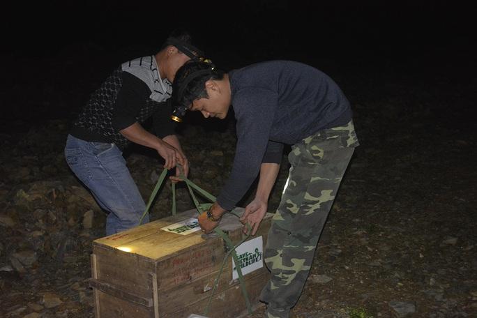 Tái thả 54 cá thể tê tê về môi trường sống phù hợp vào ngày 28-12.