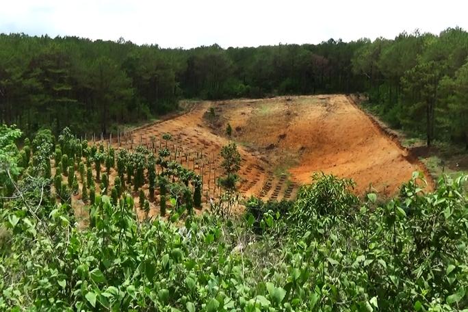 Người dân chặt phá rừng thông để lấy đất canh tác ở tỉnh Gia Lai Ảnh: HOÀNG THANH