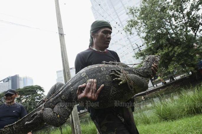 Những con thằn lằn khổng lồ được dân địa phương gọi là hia. Ảnh: Bangkok Post