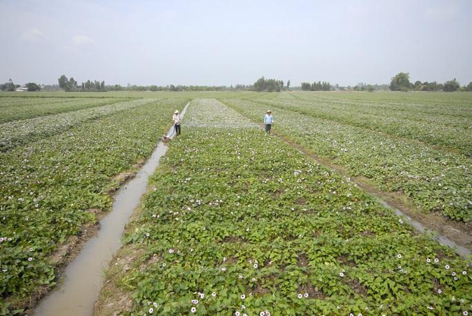 Người dân cần mở rộng hạn điền để có thể đầu tư phát triển sản xuất nông nghiệpẢnh: NGỌC TRINH
