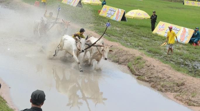 Đôi bò quái đản nhất của giải đua năm nay.