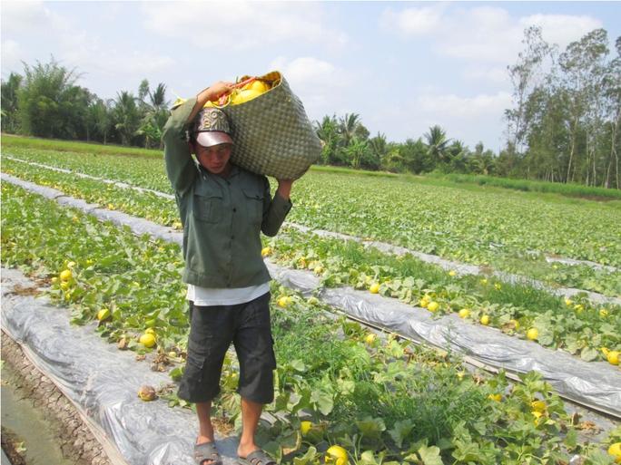 Nhiều nông dân ở miền Tây vẫn còn dùng điện để bẫy chuột phá hoại nông sản, dẫn đến nhiều cái chết thương tâm xảy ra. Ảnh: NGỌC TRINH