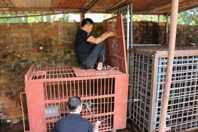 Các nhân viên cứu hộ đưa gấu ra ngoài lồng sắt