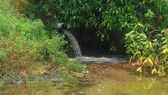 Nước thải từ kho đông lạnh được xả ra con kênh phía sau