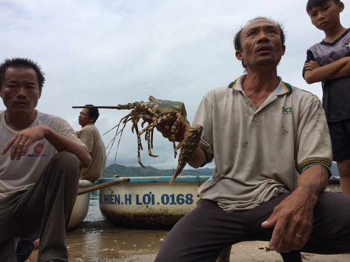 Mỗi ngày tôm càng thêm chết, người nuôi đang lo lắng chuyện không có vốn để trả nợ ngân hàng. Thị xã Sông Cầu được cho là một trong những nơi nuôi tôm hùm nhiề ở khu vực Duyên hải Nam Trung bộ.
