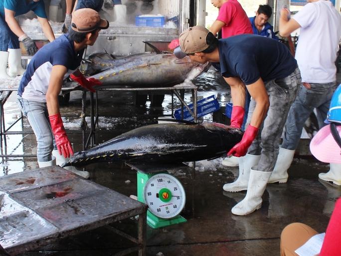 Các vựa thu mua đánh giá chất lượng cá ngừ đại dương đợt này và sản lượng đều đạt tốt trong khi cá thế giới đang khan hiếm