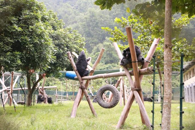 Gấu ngựa được nuôi dưỡng tại khu bán hoang dã của Trung tâm Cứu hộ gấu Việt NamẢnh: Thùy Trinh
