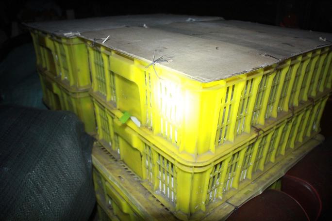 Những thùng hàng chứa rắn hổ mang