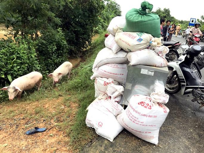 Đồ đạc, gia súc được người dân Quảng Trị di chuyển lên nơi cao ráo để tránh lũ