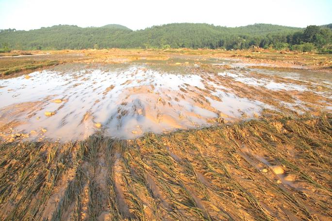 Lúa, hoa màu của người dân bị chôn vùi trong bùn đất khi lũ quét qua.