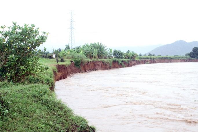 Bờ sông Dinh ở xã Phước Sơn, huyện Ninh Phước bị sạt lở nặng do lũ, uy hiếp khu dân cư quanh vùng.