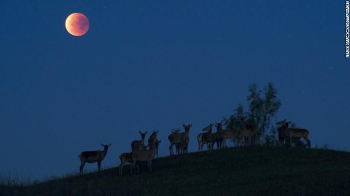 Siêu trăng máu tại Belarus ngày 27-9 năm nay. Ảnh: AP