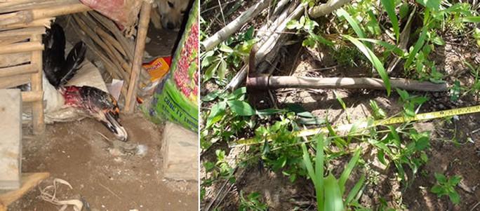 Hiện trường phát hiện con ngan chết và cây búa chim được phát hiện tại vườn mì.