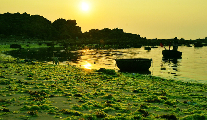 Bãi rêu biển Nhơn Hải đẹp như mơ dưới ánh nắng ban mai.