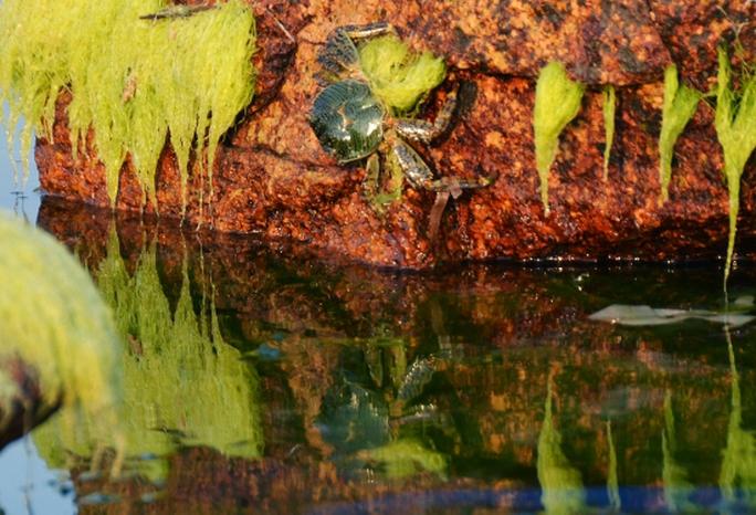 Vẻ đẹp của những tảng đá hồng và rêu xanh trong lòng biển Nhơn Hải
