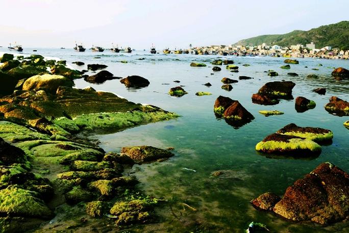 Không gian của biển Nhơn Hải trong mùa rêu năm nay.