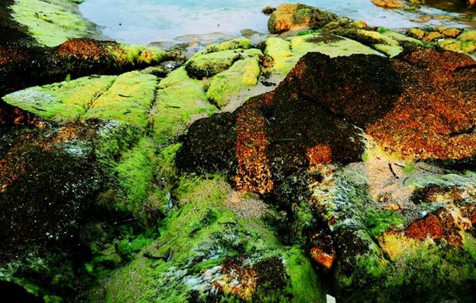 Sắc rêu nổi bật trên màu đá và nước biển.