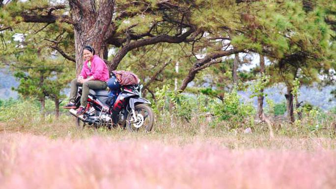Đồi cỏ hồng đẹp ngẩn ngơ níu chân biết bao bước chân lữ khách