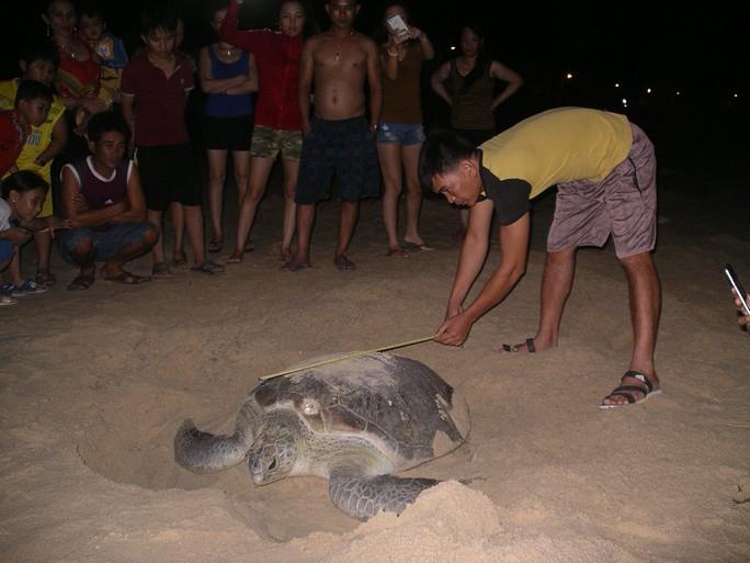 Đây là một con rùa lớn, dài hơn 1m, nặng hơn 80kg