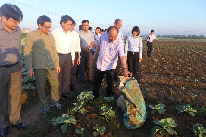 Thủ tướng và đoàn công tác thị sát xã trồng rau sạch Văn Đức, huyện Gia Lâm, TP Hà Nội