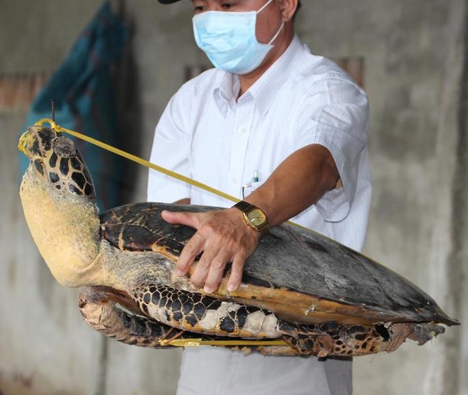 Xác rùa biển quý hiếm