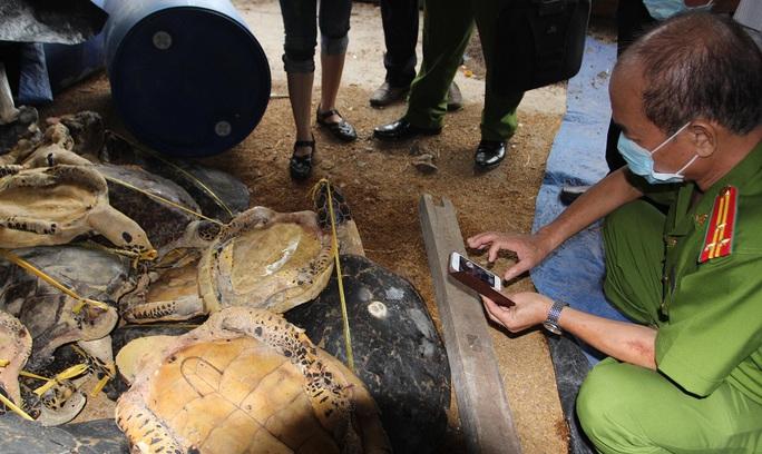 Cơ quan chức năng phát hiện hàng ngàn xác rùa biển tại 3 cơ sở của Hải