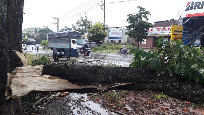 Một cây lớn bị ngã đổ chắn ngang đường