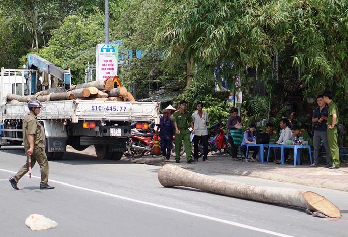 Thân cây dừa rơi trong lúc được cẩu