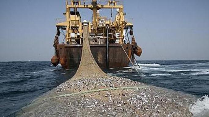 7 tàu cá Trung Quốc bị bắt ở Tây Phi - Ảnh 1.