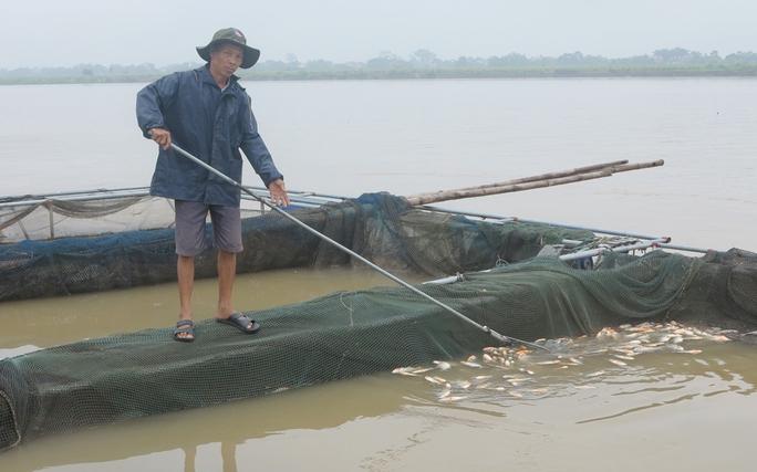 Thủy điện Hòa Bình xả lũ, hơn 200 tấn cá lồng chết ngạt - Ảnh 1.