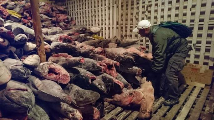Ecuador bắt tàu Trung Quốc chở đầy cá mập - Ảnh 1.