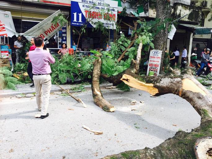 Trời nắng gió nhẹ, cây cổ thụ đổ đè lên xe Mercedes giữa phố - Ảnh 2.