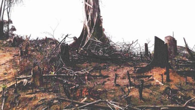 Thủ tướng yêu cầu Bình Định xử lý nghiêm phá rừng An Lão - Ảnh 1.