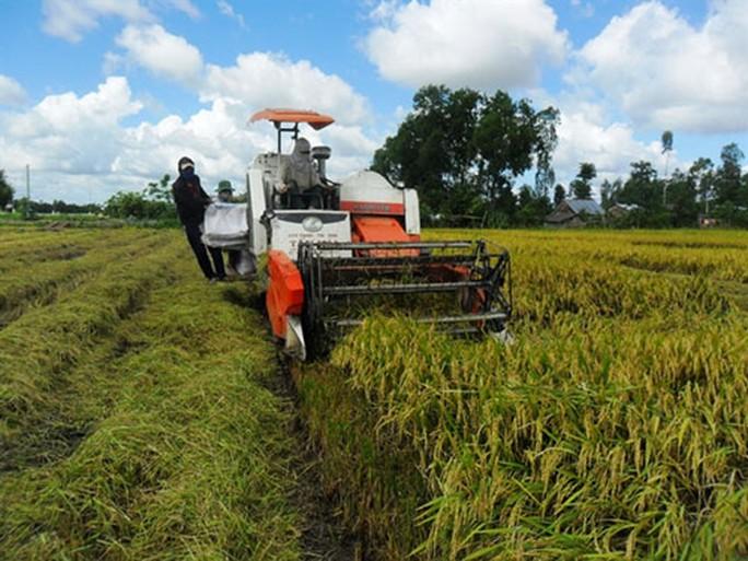 Đổ xô trồng lúa Nhật: Nhiều rủi ro - Ảnh 1.
