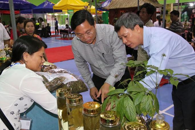 Kỳ vọng sâm Việt vươn ra thế giới - Ảnh 1.