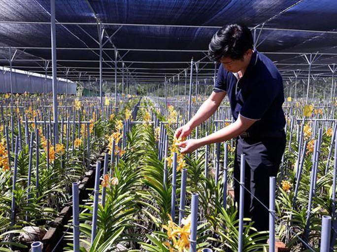 Trang trại hoa lan trên vùng đất nắng - Ảnh 1.